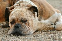 Flu in animals